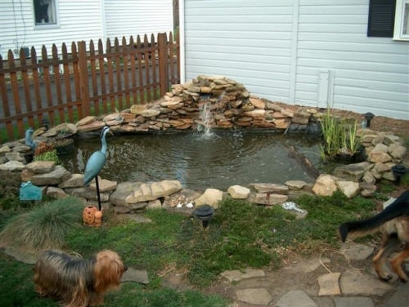 backyard-pond2